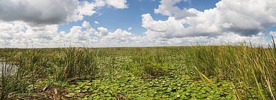 Photograph - Lake Okeechobee Marsh by Christopher L Thomley