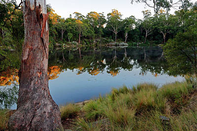 Winter Animals - Lake Parramatta Morning by Nicholas Blackwell