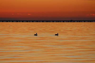 Photograph - Lake Pontchartrain - Pelicans by Beth Vincent