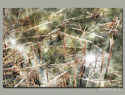 Digital Art - Lake Reeds by Deborah Nakano
