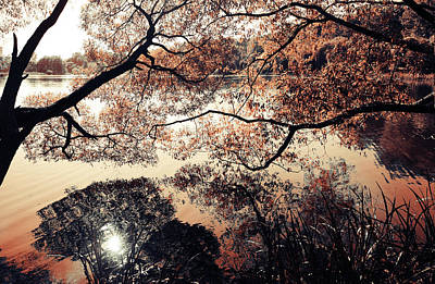 Photograph - Lake Reflections. Airy Lace Of Autumn by Jenny Rainbow