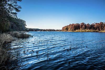 Photograph - Lake Seminole 2 by Debra Forand