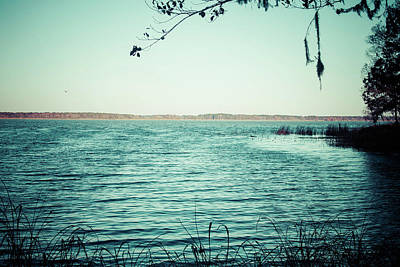 Photograph - Lake Seminole by Debra Forand