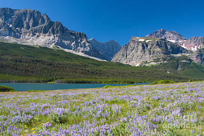 Photograph - Lake Sherburne - Glacier Np by Katie LaSalle-Lowery