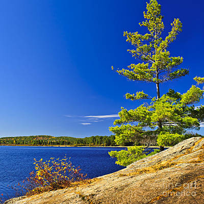 Algonquin Photograph - Lake Shore In Ontario by Elena Elisseeva