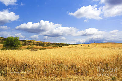 Photograph - Lake Skinner Regional Park Open-space District by Richard J Thompson