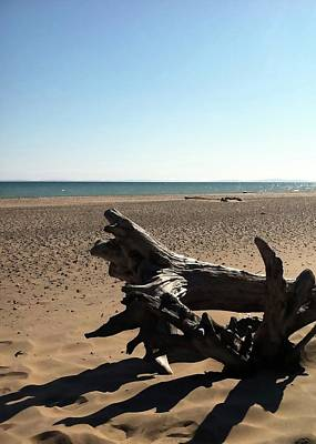 Photograph - Lake Superior Driftwood by Michelle Calkins