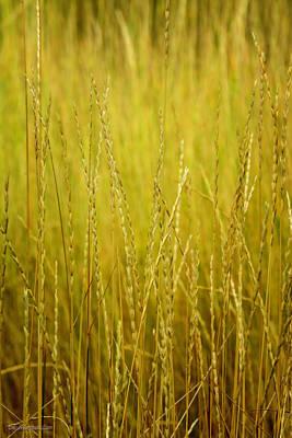 Photograph - Lake Tahoe Wild Grasses by LeeAnn McLaneGoetz McLaneGoetzStudioLLCcom
