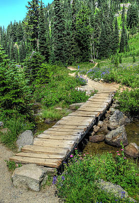 Photograph - Lake Tipsoo Trail by Greg Sigrist
