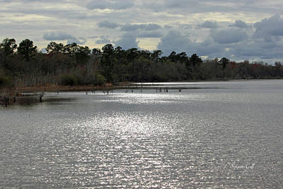 Lake Waccamaw Photograph - Lake Waccamaw II by Suzanne Gaff