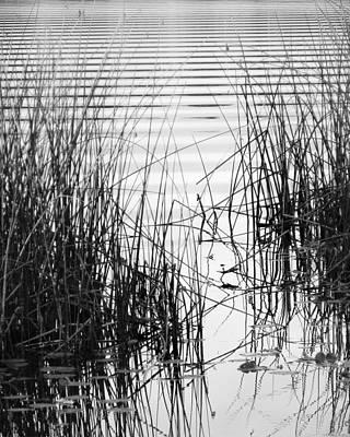 Music Figurative Potraits - Lake Wake by Francesa Miller