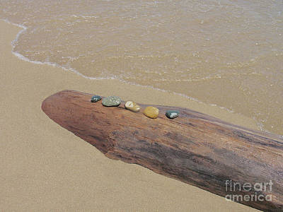 Photograph - Lakeshore Still Life by Ann Horn