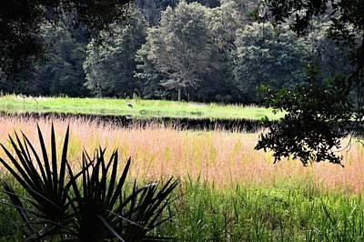 Photograph - Lakeside Beauty  by Warren Thompson