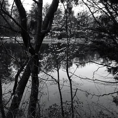 Lakeside Dogwood Reflection Art Print