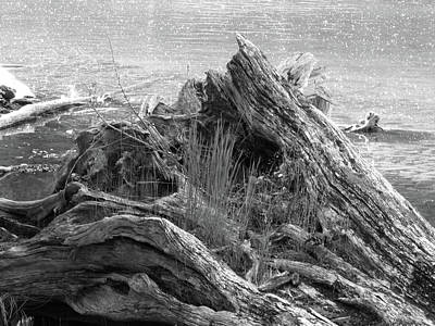 Photograph - Lakeside Driftwood by Ansel Price