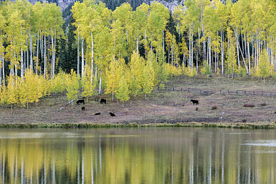 Photograph - Lakeside Grazing by Denise Bush