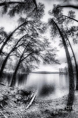 Photograph - Lakeside Palms Bw by Dan Carmichael