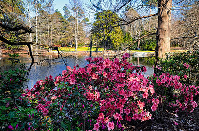 Photograph - Lakeside Spring by Linda Brown