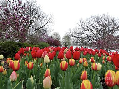 Photograph - Lakeside Tulips In Spring by Rebecca Overton