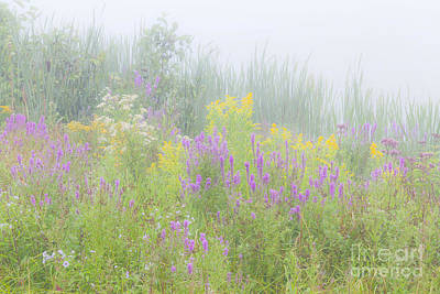 Photograph - Lakeside Wildflowers by Alan L Graham