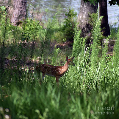 Lakeside Youngster Art Print