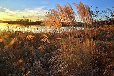 Photograph - Lakewood Pampas Grass At Sunrise by Ray Mathis