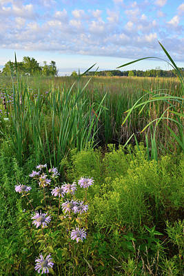 Photograph - Lakewood Wetland Scene by Ray Mathis
