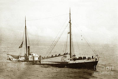 Photograph - Lakme Wooden Steam Schooner  January 19, 1911 by California Views Mr Pat Hathaway Archives