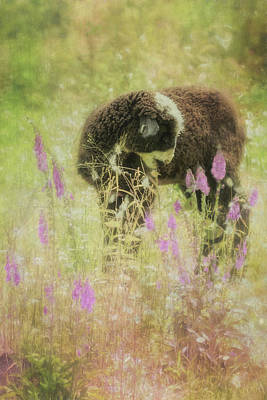 Photograph - Lamb At Springtime Painterly by Belinda Greb