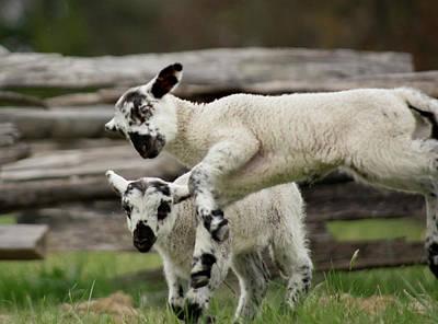Photograph - Lamb Block by Buddy Scott