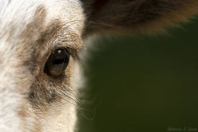 Sheep Photograph - Lamb Eyelashes by Warren Sarle