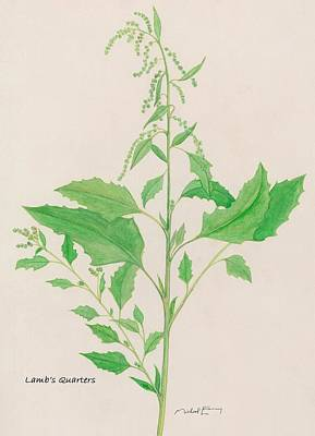 Painting - Lamb's Quarters - Chenopodium Album by Michael Earney