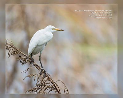 Photograph - Lamentations 3 25-26 by Dawn Currie