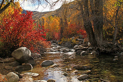 Lamoille Creek Art Print by Donna Kennedy