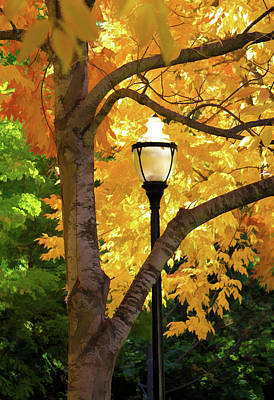 Photograph - Lamp In Lithia Park by Bonnie Follett