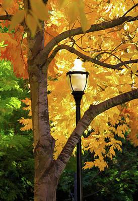 Photograph - Lamp In Lithia Park by Bonnie Follett