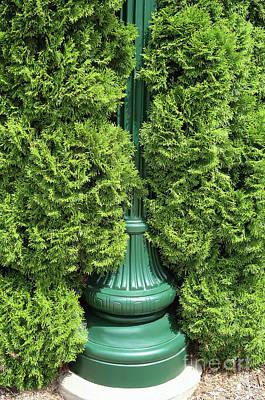 Photograph - Lamppost Greens by Ann Horn