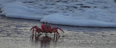 Exploramum Wall Art - Photograph - Lamu Island - Crabs Playing At Sunset 3.1 by Exploramum Exploramum
