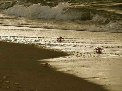 Exploramum Wall Art - Photograph - Lamu Island - Crabs Playing At Sunset 5 by Exploramum Exploramum
