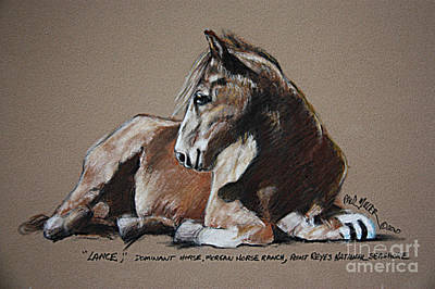 Morgan Horse Painting - Lance Dominate Horse At Morgan Horse Ranch Of Point Reyes National Seashore by Paul Miller
