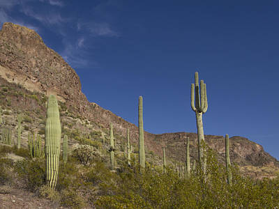 Photograph - Land O Cactus by Jean Noren