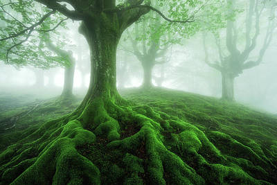 Tree Roots Photograph - Land Of Roots by Mikel Martinez de Osaba