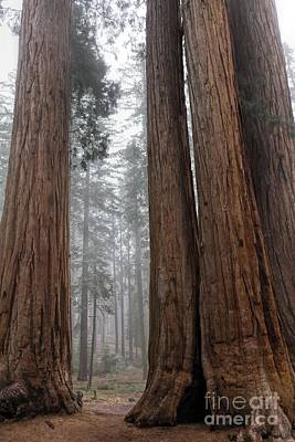 Photograph - Land Of The Giants by Peggy Hughes