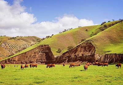 Photograph - Land Of The Happy Cows by Lynn Bauer
