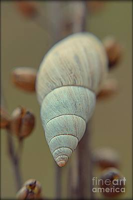 Photograph - Land Snail by Janice Spivey