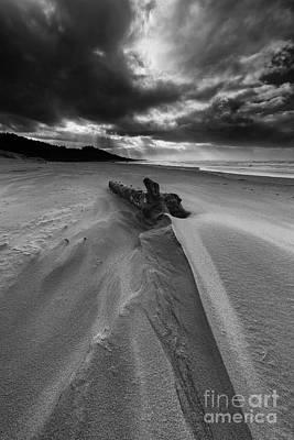 Driftwood Photograph - Landed  by Masako Metz