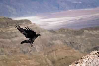 Photograph - Landing by Brian Bonham