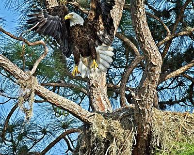 Photograph - Landing Eagle by Ronald Lutz