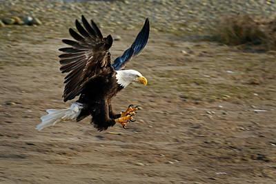 Photograph - Landing Gear Down - 365-300 by Inge Riis McDonald
