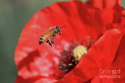 Poppy Wall Art - Photograph - Landing Gear Down by Gary Wing